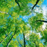 Masalah Lingkungan Yang Ada Di Indonesia